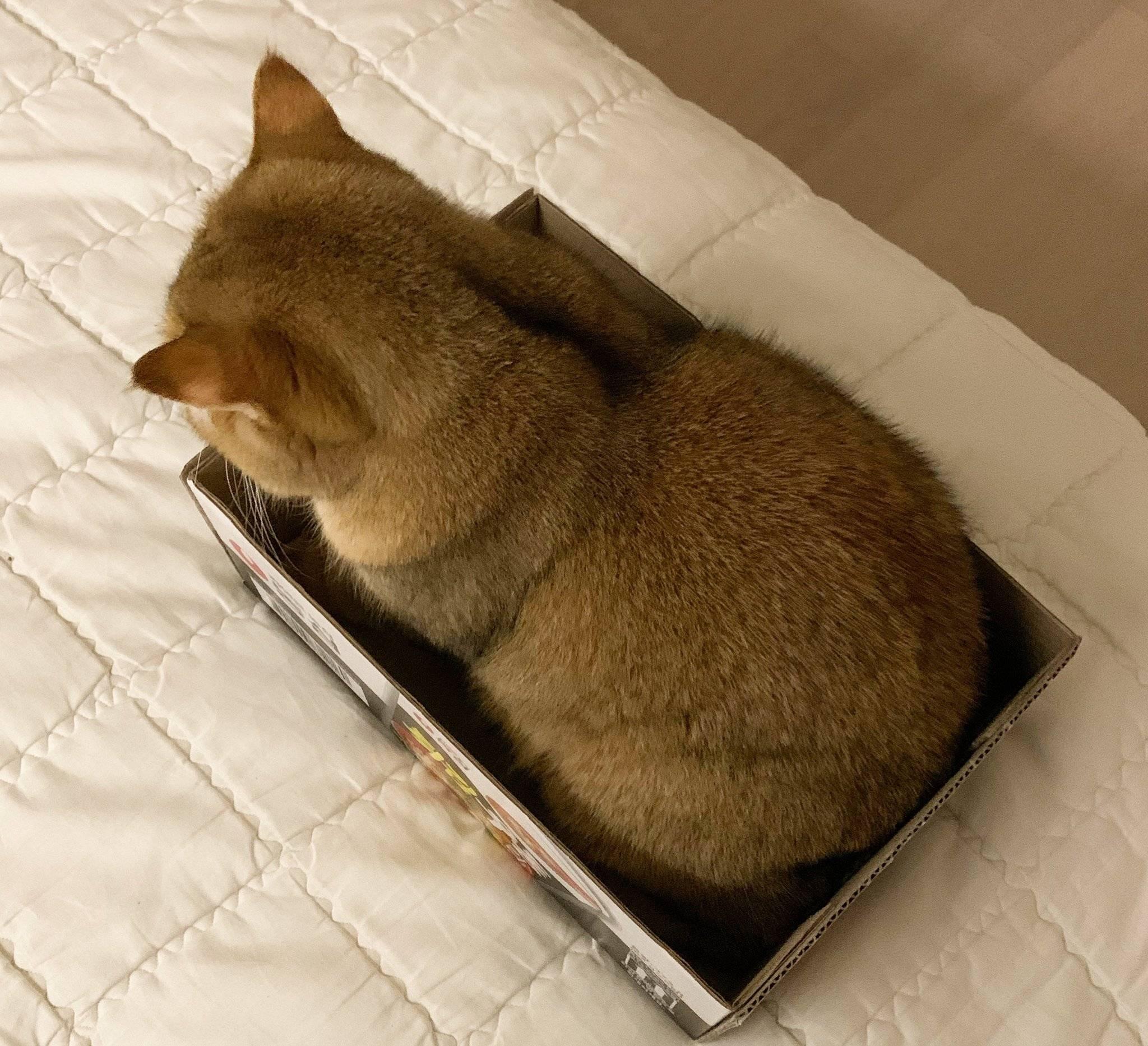튀김우동 박스를 좋아하는 냥이.jpg   인스티즈