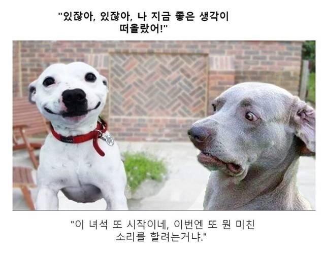 귀여운 동물짤 제목학원.jpg | 인스티즈