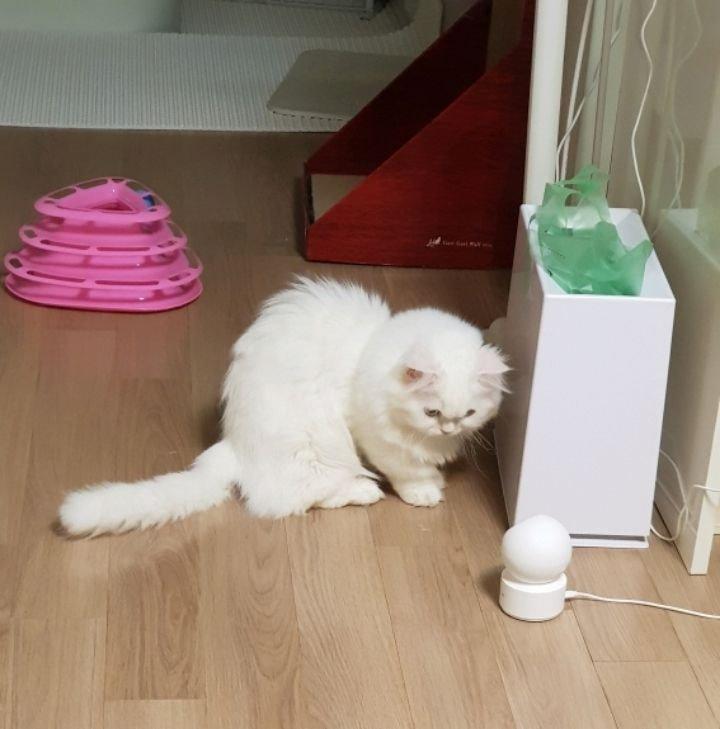 고양이를 감시하는 홈캠을 감시하는 고양이.jpgif | 인스티즈