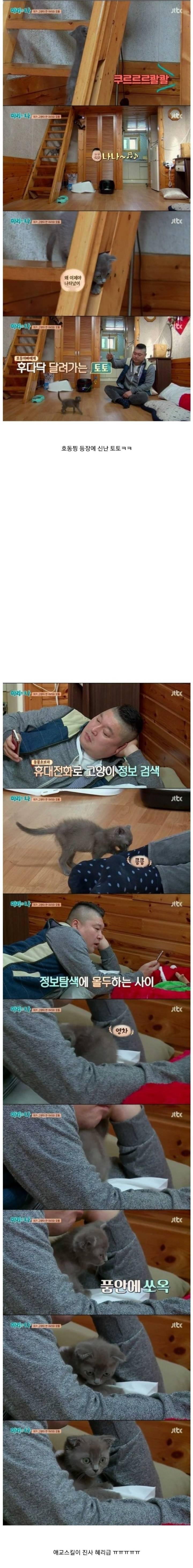 케미가 냥냥 터지는 강호동과 새끼 고양이 토토.jpg | 인스티즈