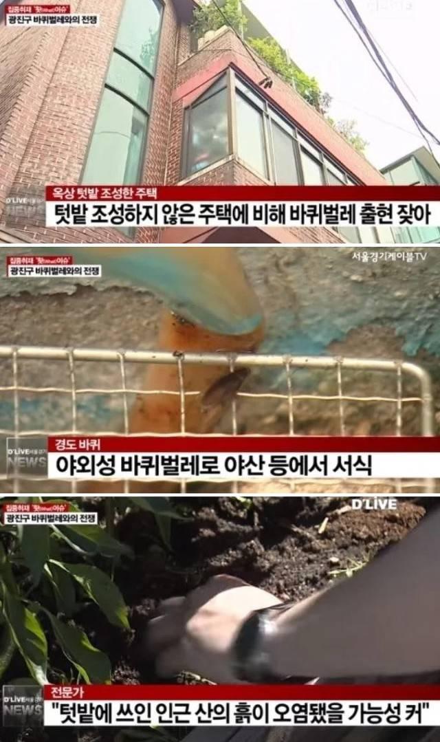 충격.. 서울 한 아파트단지에 바퀴벌레떼가 습격..JPG | 인스티즈