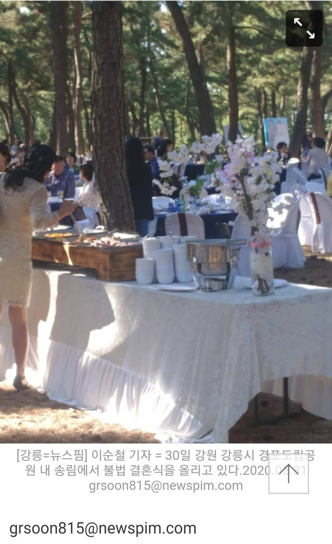 강릉 소나무숲에서 무단 결혼식 올린 커플.jpg | 인스티즈