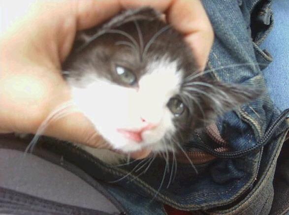 고양이상 여자가 이쁜 이유   인스티즈