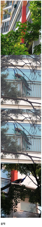 요즘 아파트 단지에 출몰하는 동물 jpg | 인스티즈
