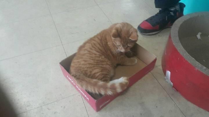 사무실을 구한 아기고양이 | 인스티즈