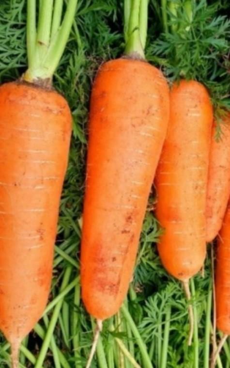당뇨에 좋은 음식 당근 효능 11가지 | 인스티즈