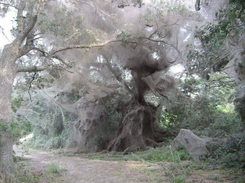 호주의 거미 시즌.jpg | 인스티즈