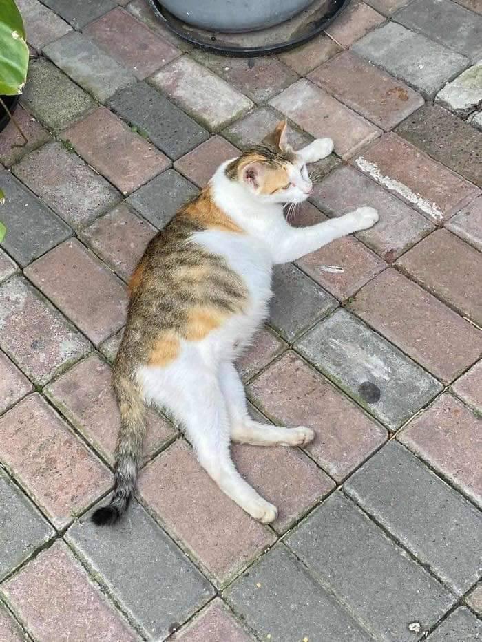 직장동료가 임신한 고양이를 데려옴 | 인스티즈