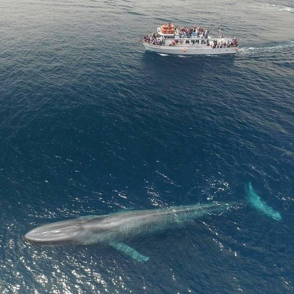 실제 고래 크기 체감짤   인스티즈