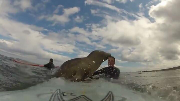 서핑하는데 새끼 바다표범이 자꾸 서핑보드를 탐냄 | 인스티즈