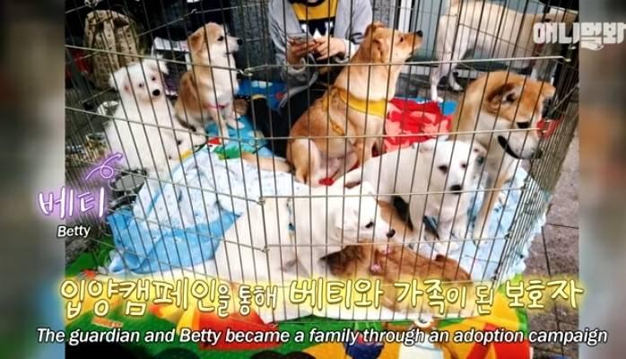 수줍음이 많은 강아지가 사람을 좋아하는 법 | 인스티즈