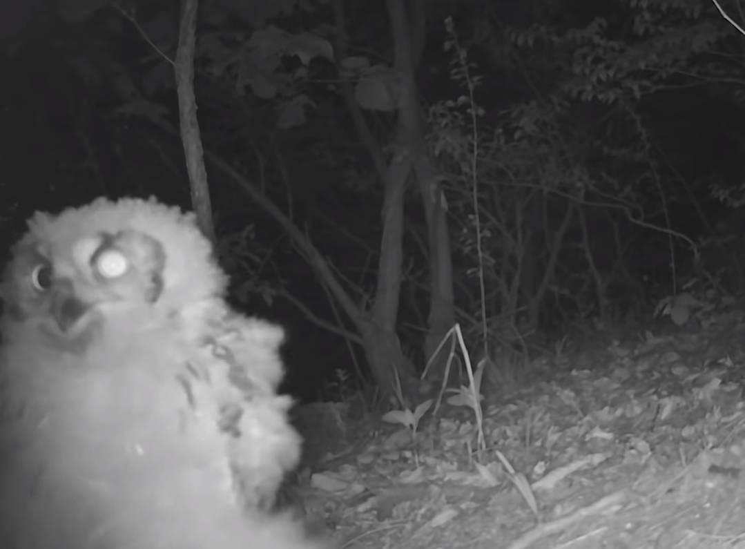 60일간의 방치한 카메라에 찍힌 산 속 동물들 | 인스티즈