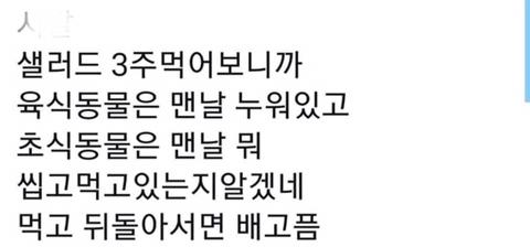 샐러드 3주 먹어본 후기.txt | 인스티즈