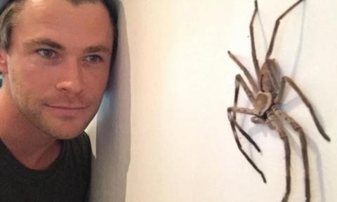 집에 자꾸 뱀,거미가 출몰한다는 크리스 햄스워스 | 인스티즈