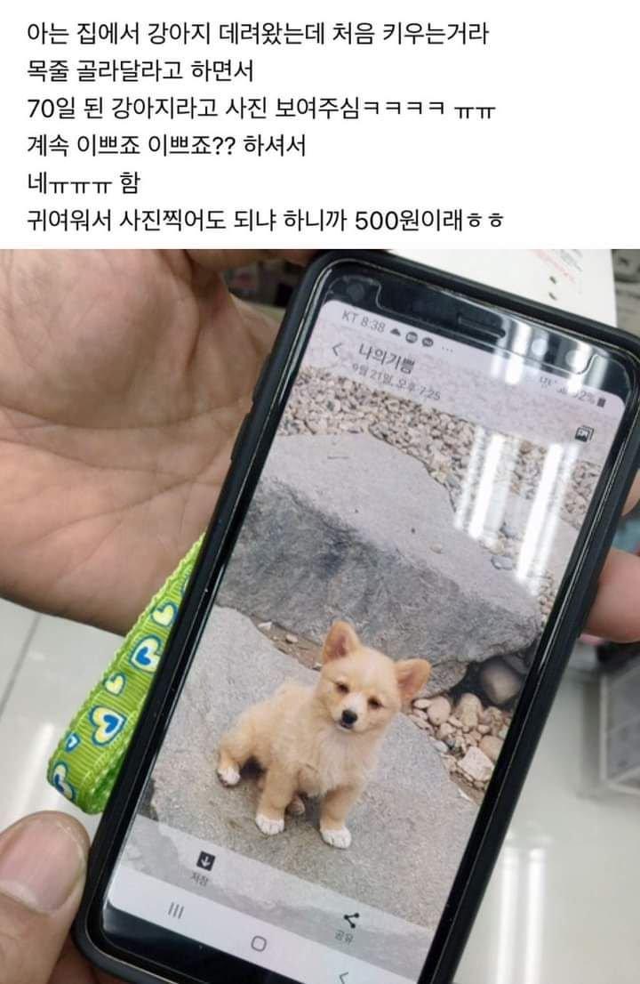 목줄 골라달라고 하면서 70일된 강아지 사진 보여주심 | 인스티즈