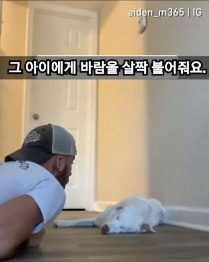 시각 청각을 잃은 강아지를 깨우는 법.jpgif   인스티즈