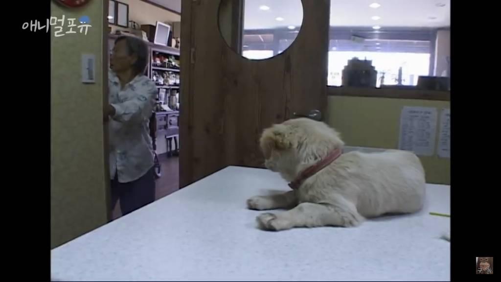 보자기로 강아지를 싸오신 할머니   인스티즈