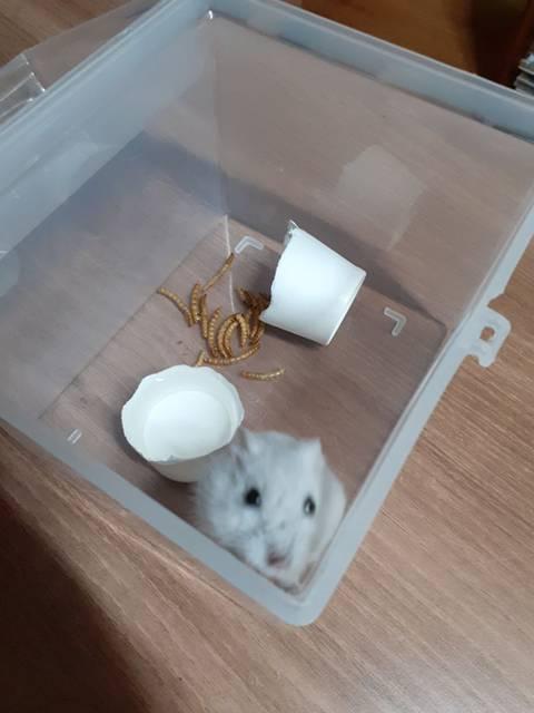 집에서 쥐 나왔는데 햄스터 같기도 하고..(+후기)   인스티즈