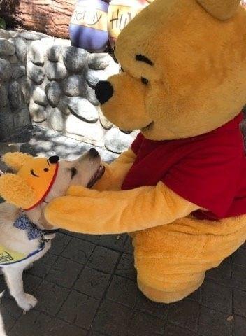 디즈니 방문한 예비안내견들 | 인스티즈