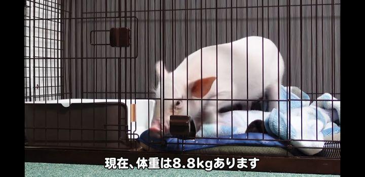 100일 후에 먹히는 돼지 진짜 근황 | 인스티즈