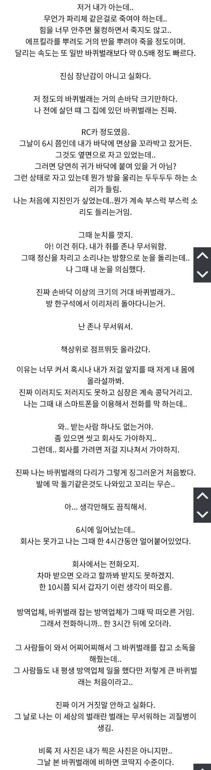 (혐오주의) 요즘 한국에 자주 등장하는 거대 바퀴벌레.jpg   인스티즈