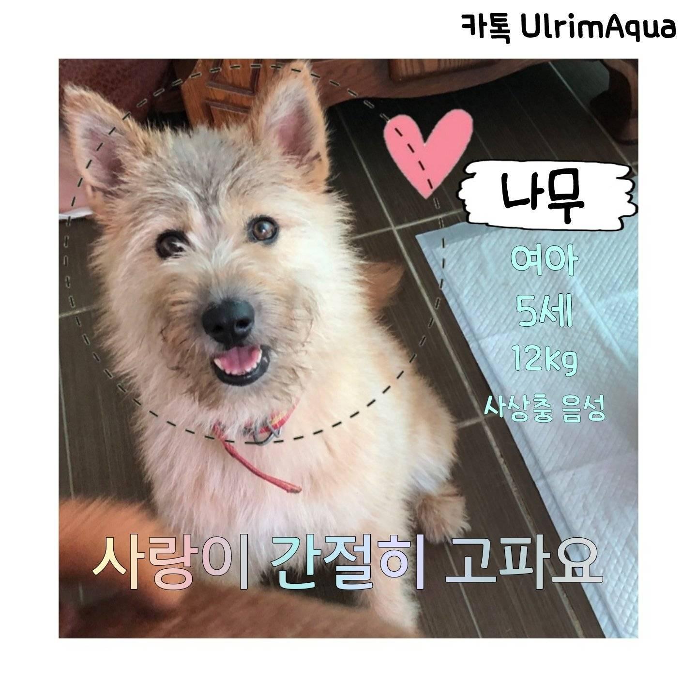 천안목천보호소의 130여마리 강아지를 10월부터 안락사한대. 입양으로 작은 생명들을 구원해줘 주변에 홍보 부탁할게   인스티즈